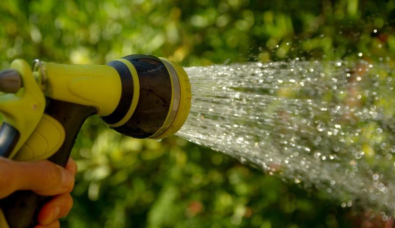 Memperhatikan Penyiraman